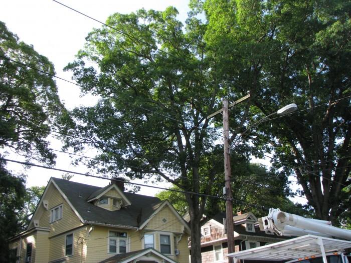 everitt-st-tree-removal (2)