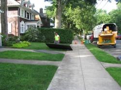 everitt-st-tree-removal (5)