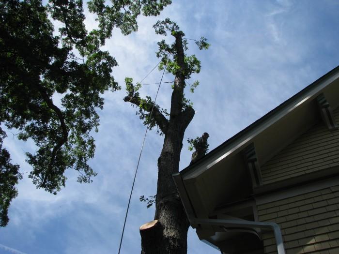 everitt-st-tree-removal (9)